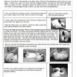 Rabbit 4-H Showmanship Guide Sample Page