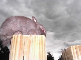 it was a dark and stormy night.  The bunny with glowing red eyes
