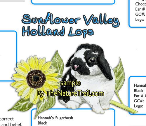 sunflower rabbit logo