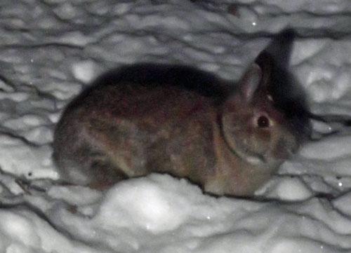 bunny at feeder