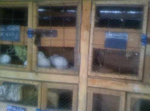 Cages currently being used in the Nairobi
