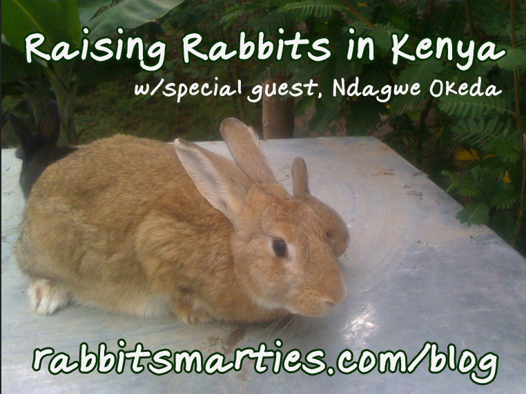 rabbit breeding kenya africa