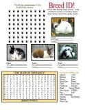 Rabbit Activity Book Page