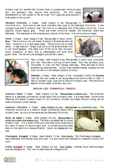 Rabbit Study Guide Page
