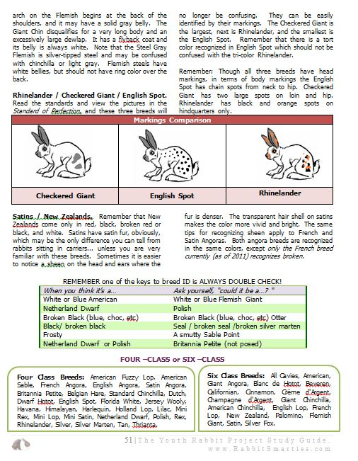 rabbit breed id guide