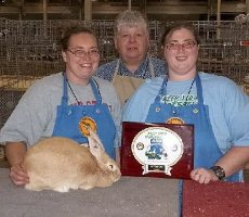 Best of Breed Palomino at ARBA convention 2011