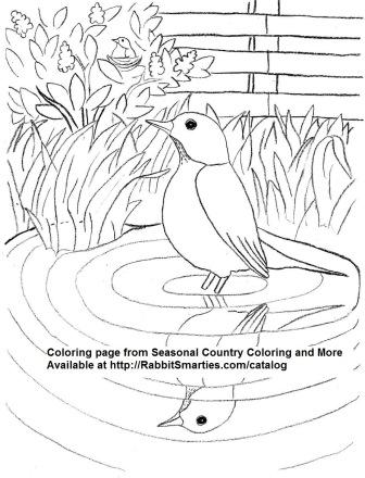 robin in springtime
